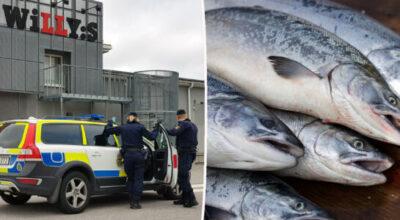 Ful fisk stal 40 kg lax på Willys